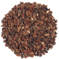 Buckwheat Seed Unhulled Microgreens