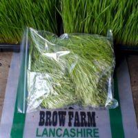 wheatgrass_cut