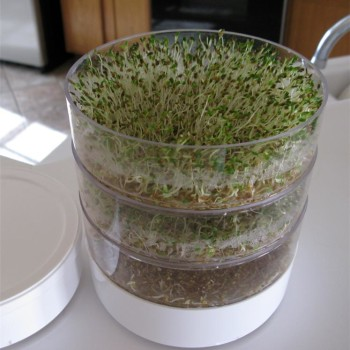 The kitchen crop sprouter produces a variety of fresh, crispy sprouts