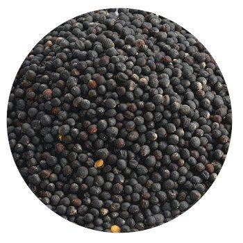 Black Rape Seed