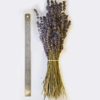 Lavender Bunches