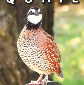 Keeping Quail by Katie Thear 2015 Edition