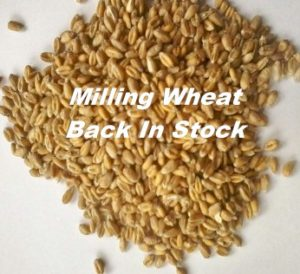 milling-wheat